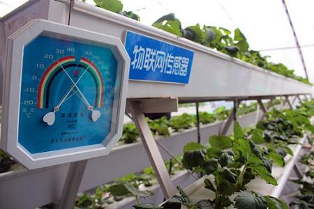 长丰草莓应用农产品追溯系统保证草莓的品牌和品质