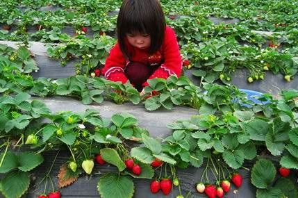 云飞农产品追溯系统为休闲农庄发展提供助力