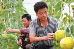 农产品追溯系统可以为农产品企业带